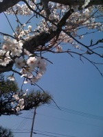 Photo1239422519300